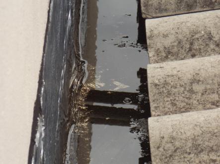 Dengue-Campinas-Agua-Parada